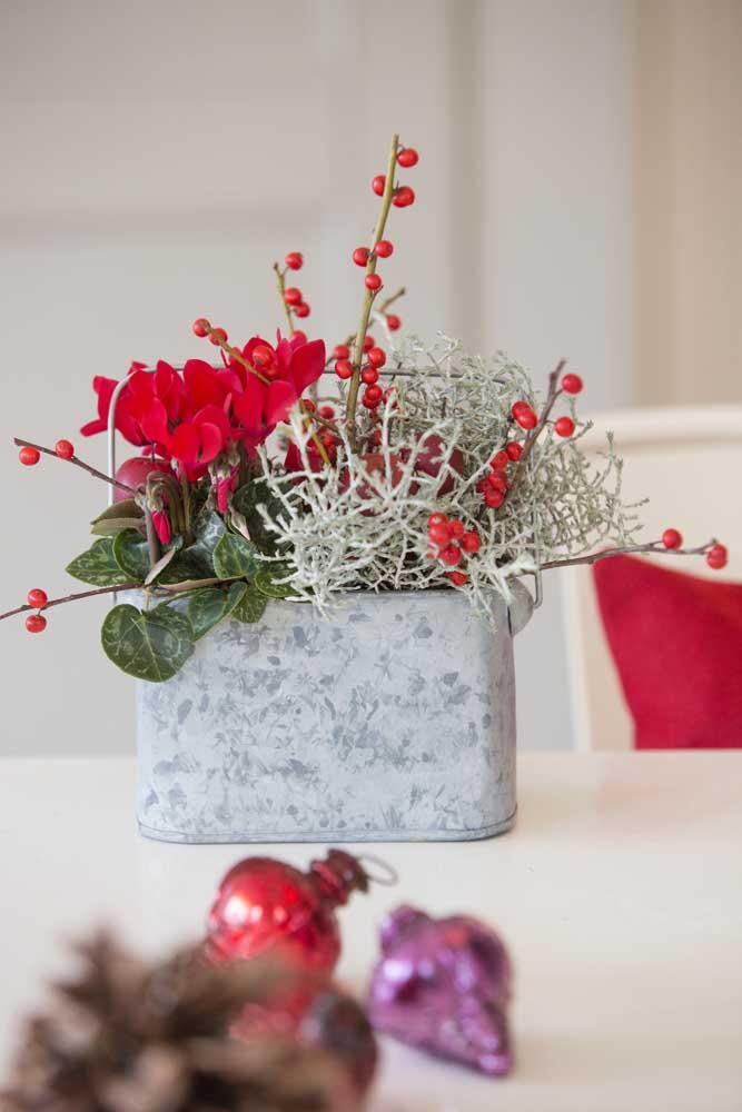Cíclames vermelhos para decorar a casa para o Natal
