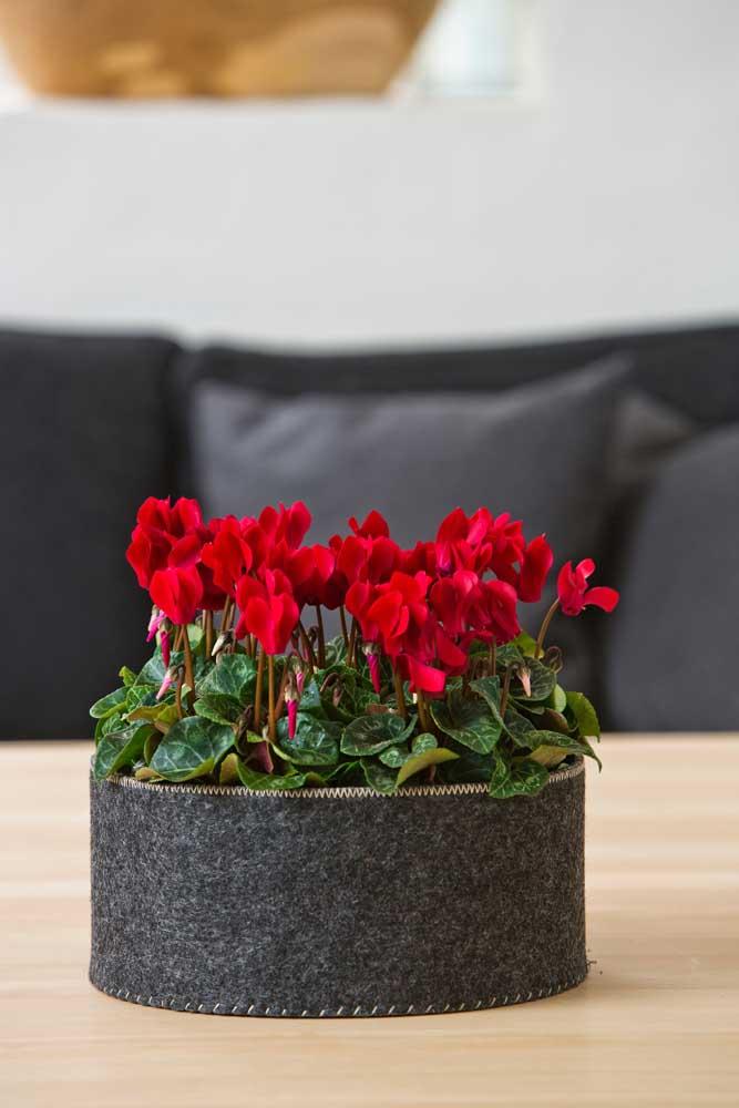 O contraste entre as flores vermelhas do cíclame e os objetos pretos é o grande destaque dessa decoração