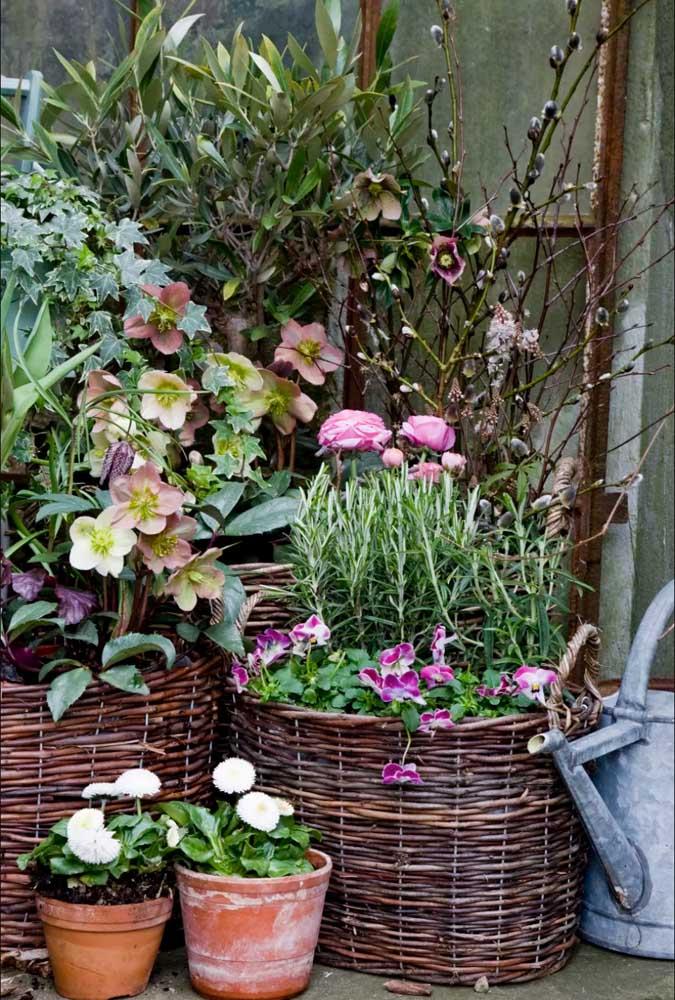Os cestos de vime garantem um charme a mais para as pequenas flores de amor perfeito plantadas em vasos