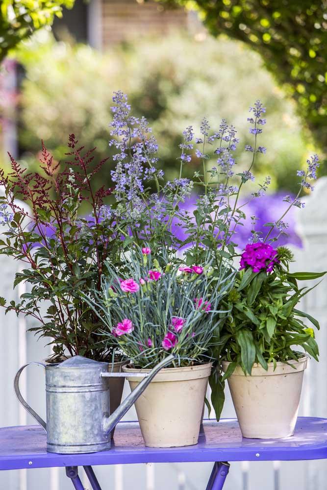 Os cravos são uma excelente opção de flor rústica, ideal para casamentos com essa temática