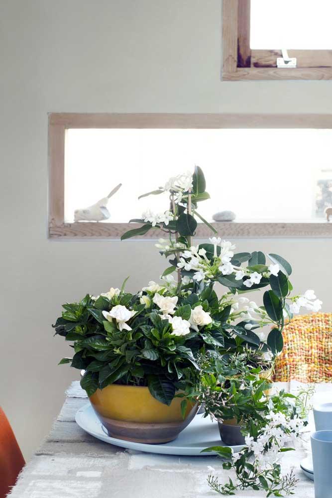 Gardênias perfumando e decorando a cozinha