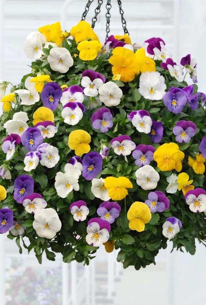 Como não se render aos encantos de um vaso suspenso de amor perfeito? A variedade de cores é o grande destaque do arranjo