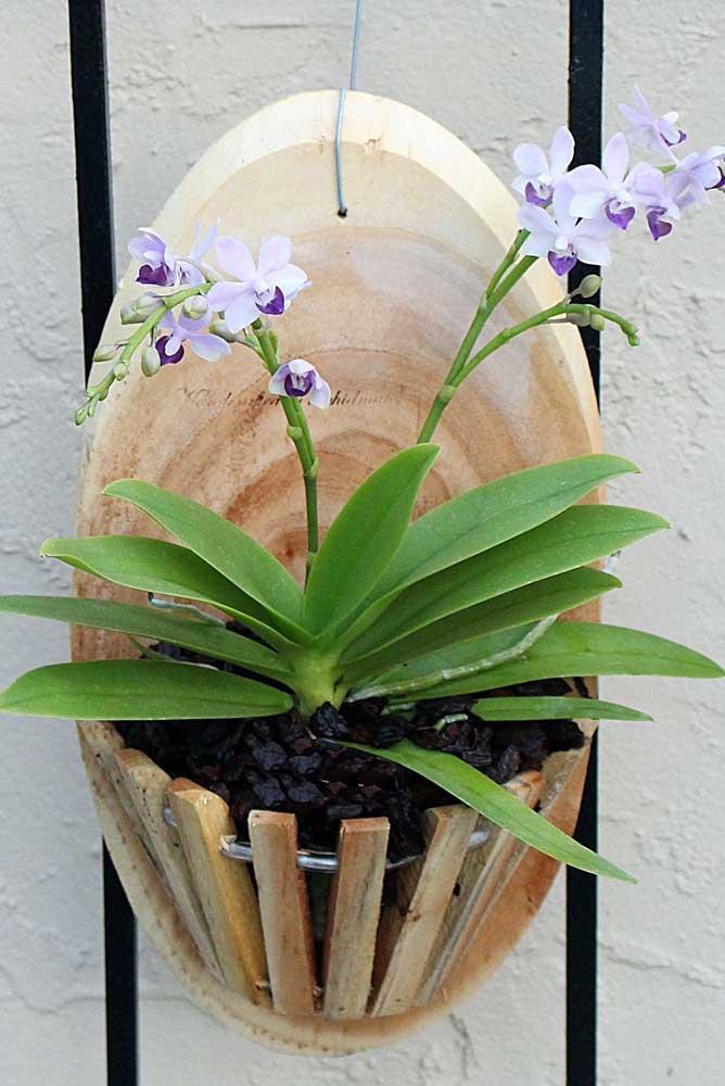 A orquídea Denphal é uma ótima opção de flor de inverno para jardim e áreas externas