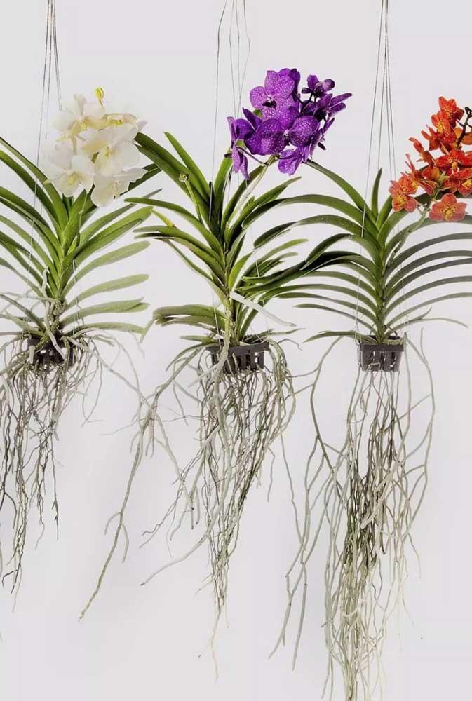 Orquídeas para um inverno colorido e cheio de encantos!