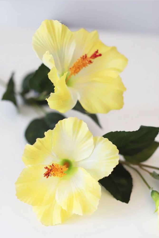 Exóticos e tropicais: os hibiscos amarelos formam uma decoração e tanto