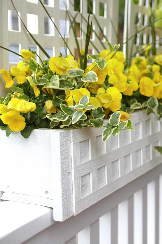 Hibiscos na varanda. Uma boa pedida para preencher a área externa da casa