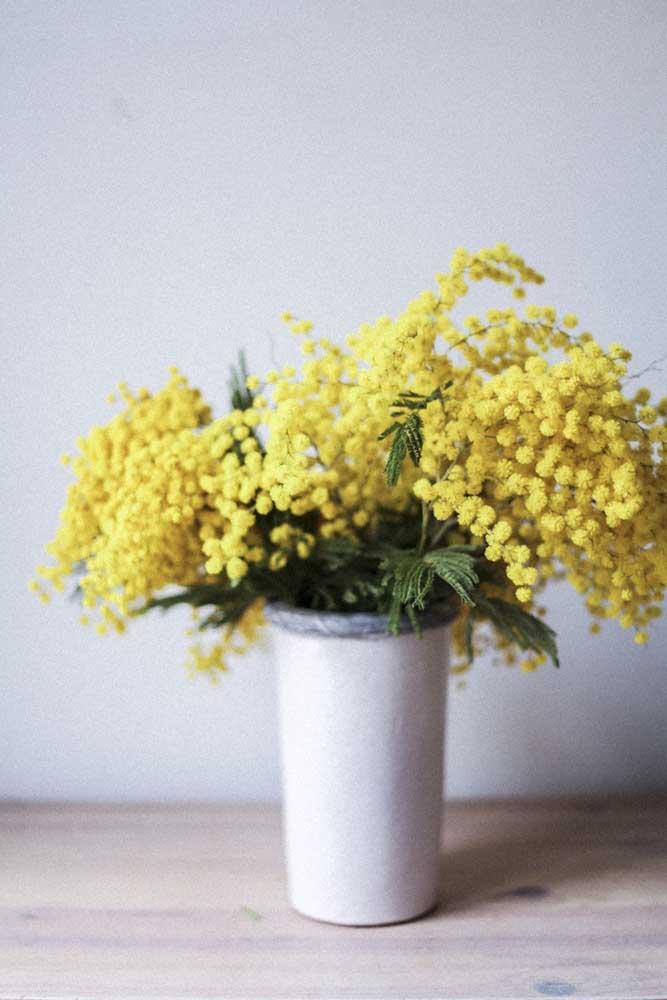 Um mini arranjo de acácias amarelas para iluminar e acender a decoração