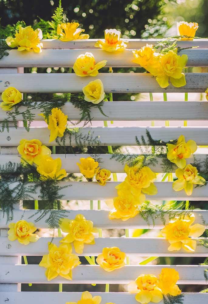 Quem vai resistir a uma foto nesse painel de narcisos amarelos?