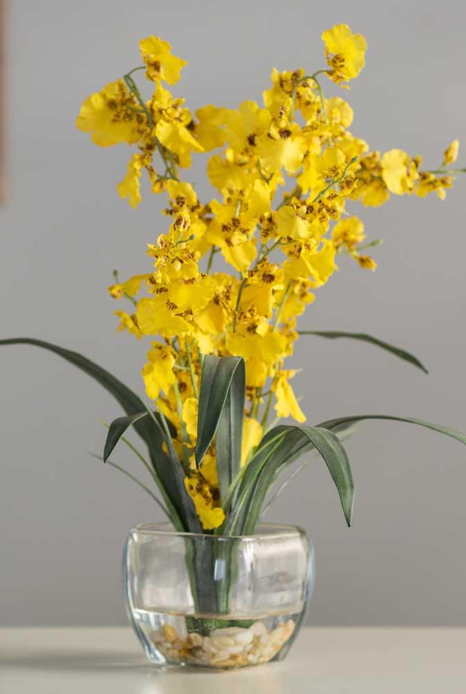A orquídea chuva de ouro é a variedade amarela mais conhecida e popular