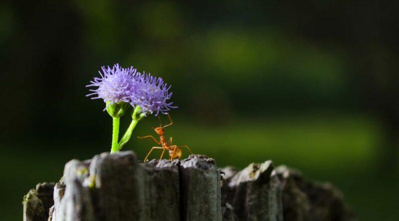 Como acabar com formigas: dicas e truques caseiros para você seguir agora