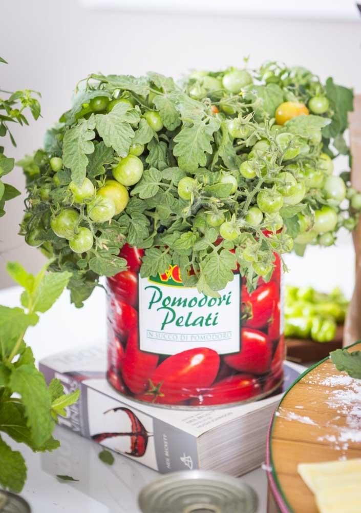 Nada melhor do que usar vasos com plantas e flores para decorar a mesa do cachorro quente.