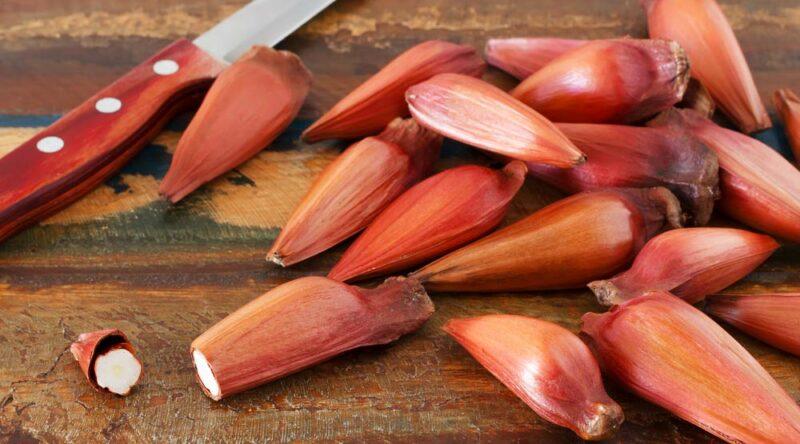 Como cozinhar pinhão: veja as principais formas e como descascar