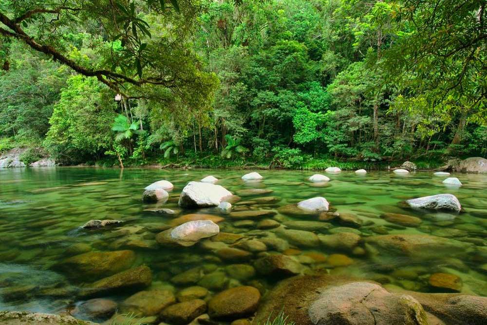 Conheça as 10 maiores florestas do mundo por área