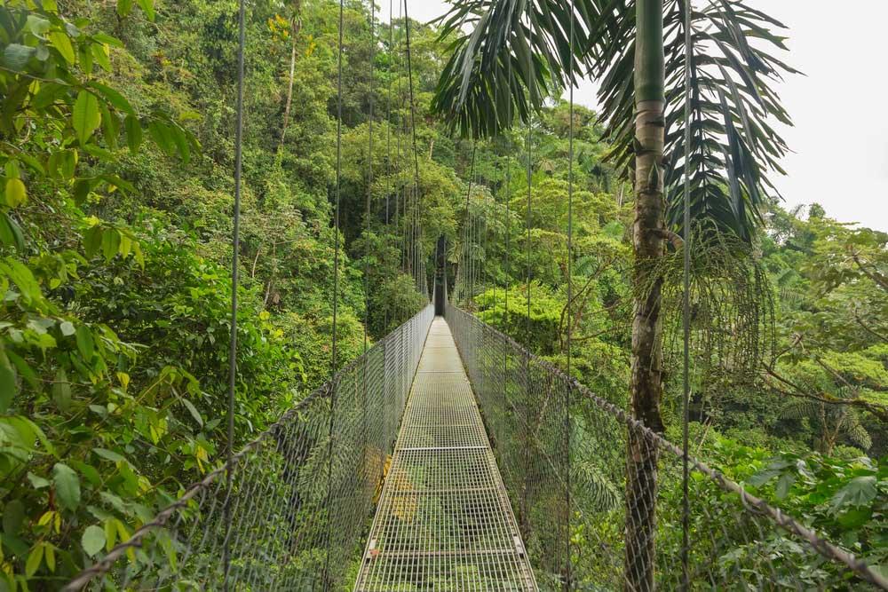 Floresta Costa Rica