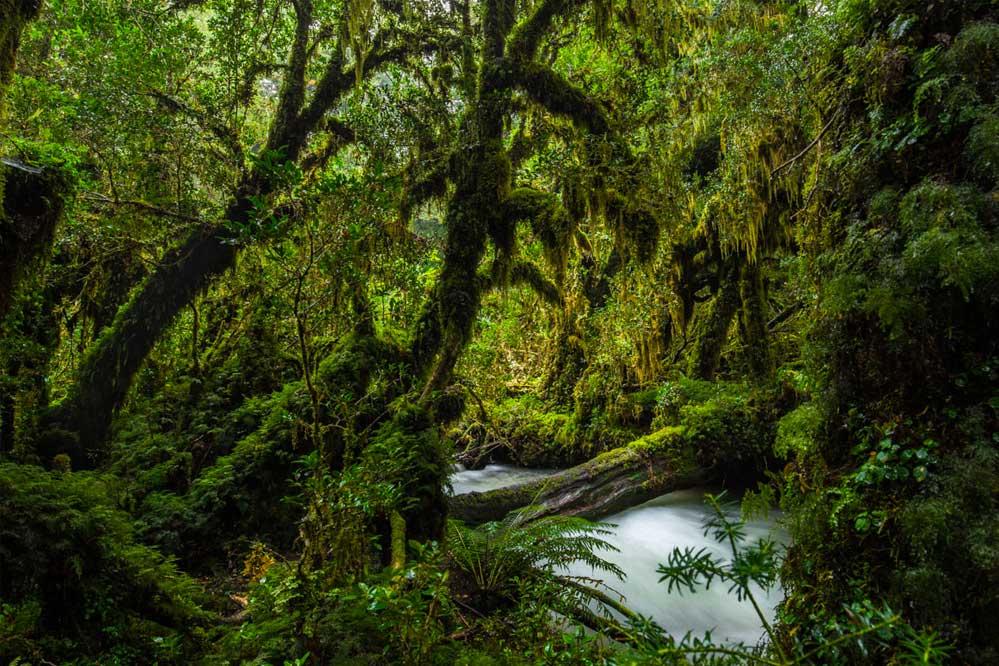Floresta valdiviana no Chile