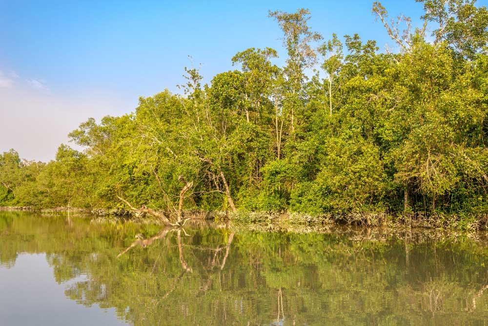 Parque Sundarbans