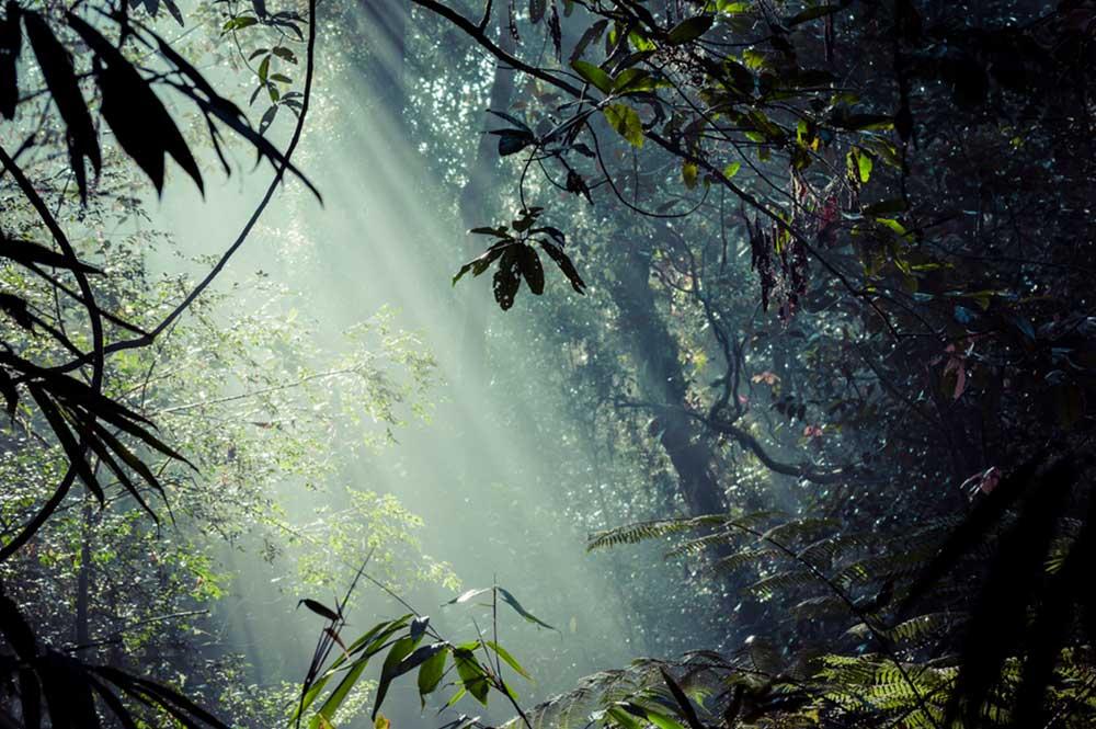 Floresta Sinharaja