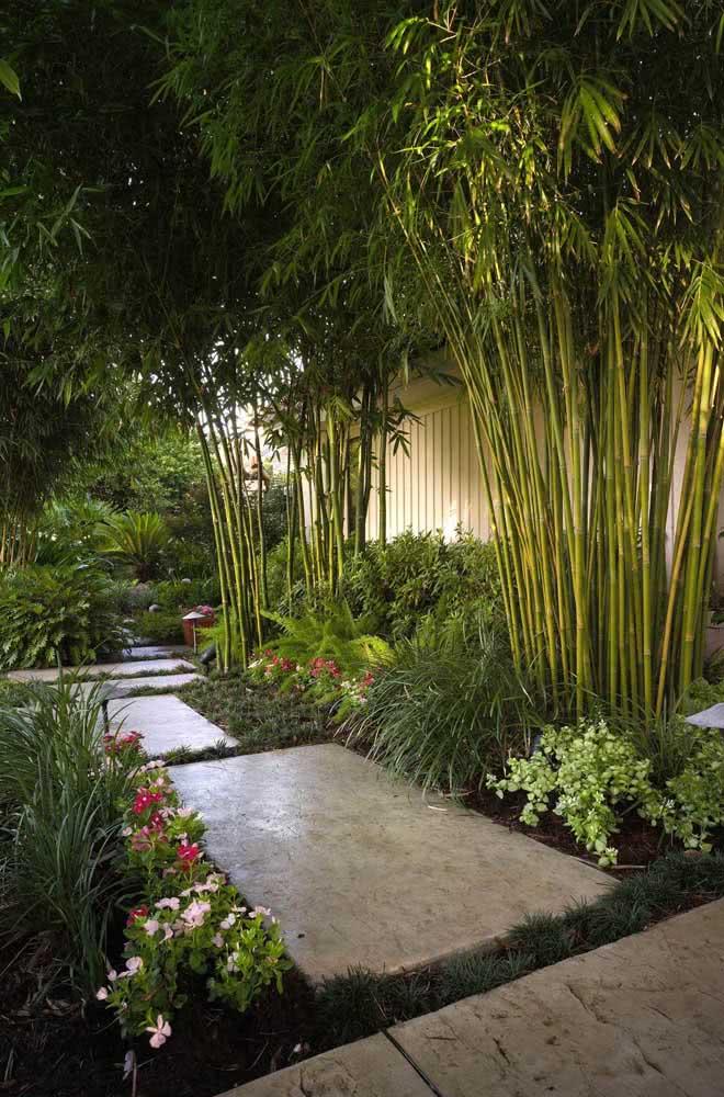 Mas se a intenção é recorrer a um jardim com visual zen ou oriental, os bambus não podem faltar