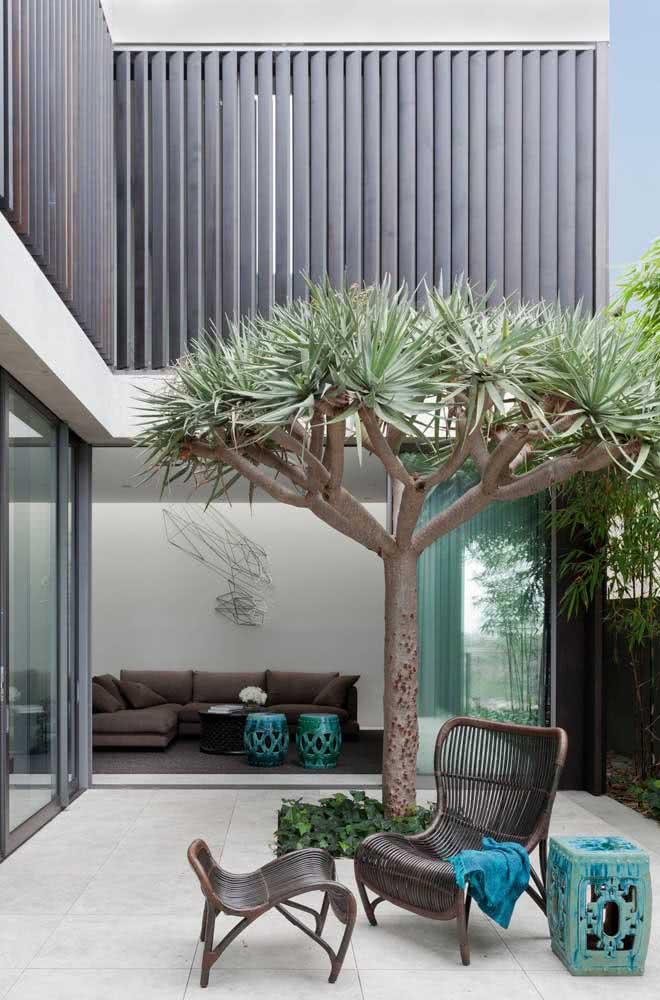 A Dracena é uma planta fácil de ser cultivada e que fica linda em propostas de paisagismo moderno