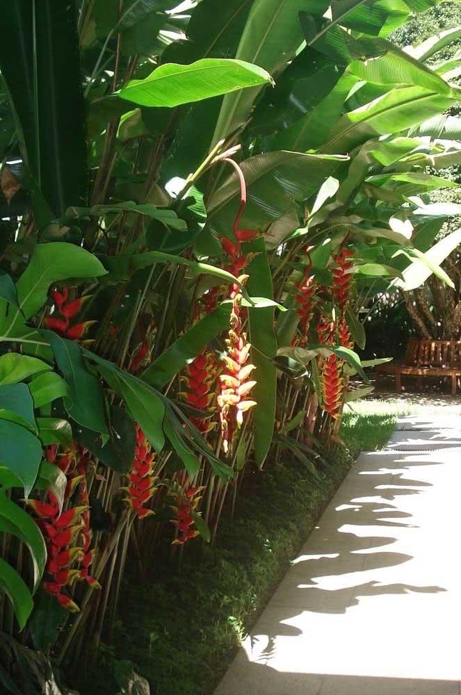 As Helicónias são a cara de um jardim tropical e festivo