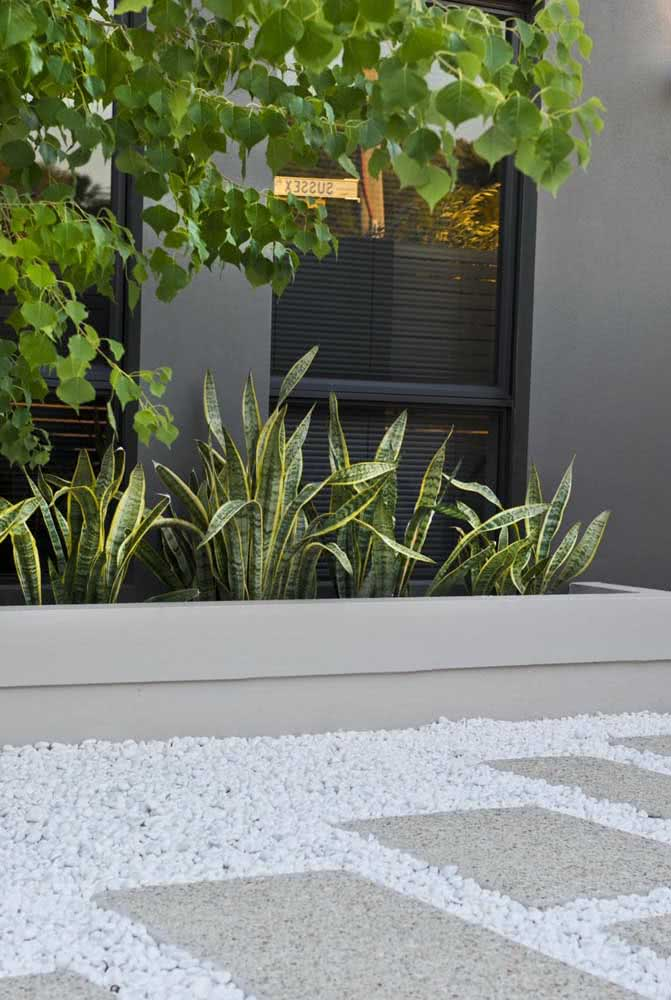 A planta mais popular entre quem não tempo para jardinagem: a Espada de São Jorge. A espécie vai bem tanto em jardins externos, quanto dentro de casa