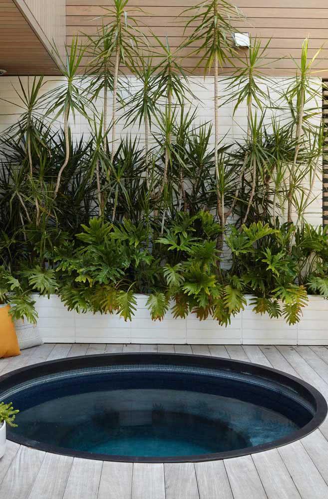 Composição rústica e tropical de Xanadus para o jardim com piscina