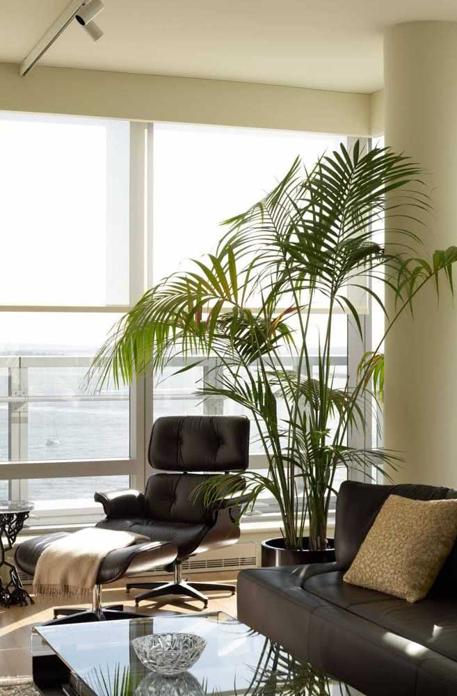Já a Bambu Areca é a campeã das plantas para dentro de casa. Fácil de cuidar e se adapta muito bem a ambientes fechados e com baixa luminosidade