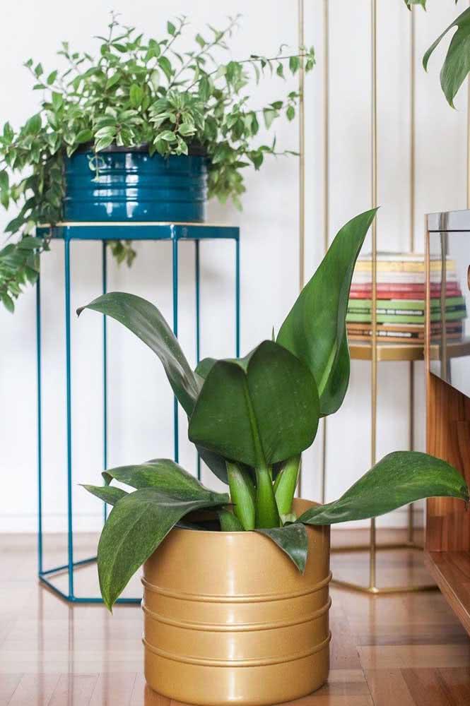 A Pacová é outra planta ornamental simples de cuidar. Valorize a espécie escolhendo um vaso super bonito para ela!