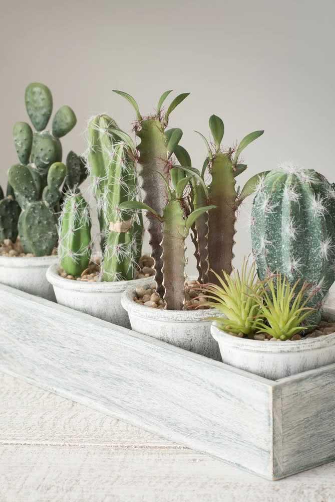 Que tal uma coleção de Cactus na varanda ou na sala?