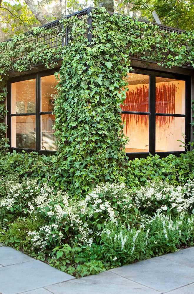 Já quem prefere optar por um jardim rústico, pode apostar sem medo na Hera. A planta é perfeita para fazer forrações verticais em muros e paredes