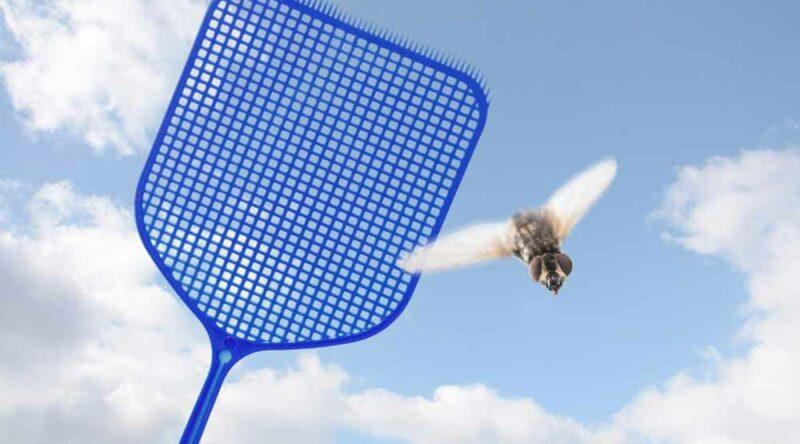 Como espantar moscas: veja truques caseiros e dicas essenciais