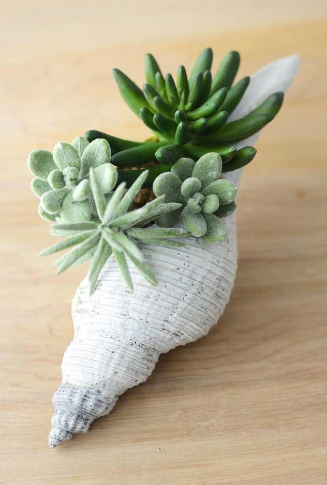 O que acha de plantar suas suculentas em uma concha do mar?