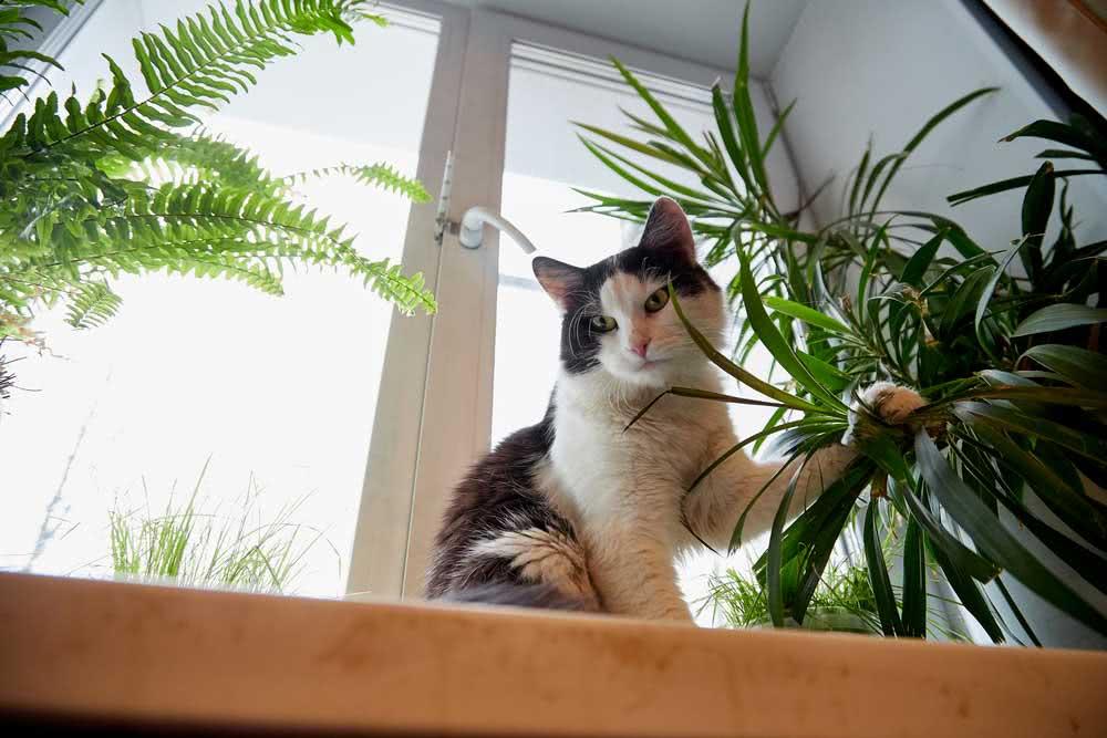 Quais os sintomas de intoxicação por planta em gatos
