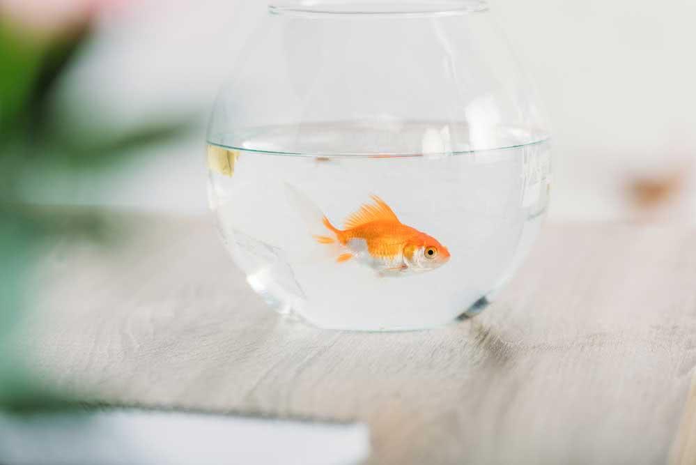 Dê uma nova chance para água do aquário