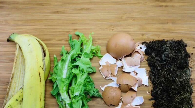 Adubo caseiro: descubra como fazer o seu com restos de comida