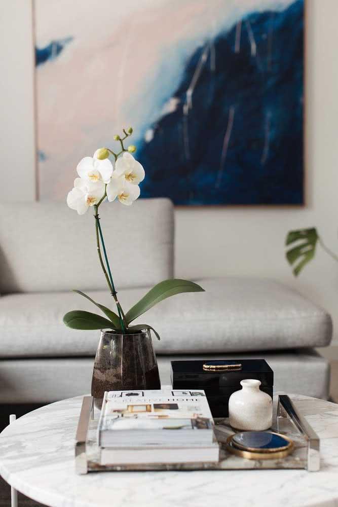 Já aqui, a orquídea branca Phalaenopsis descansa sobre a mesa de centro
