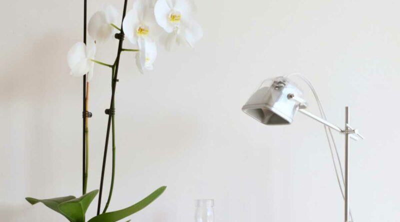 Orquídea branca: significado, como cuidar, espécies e fotos para conferir