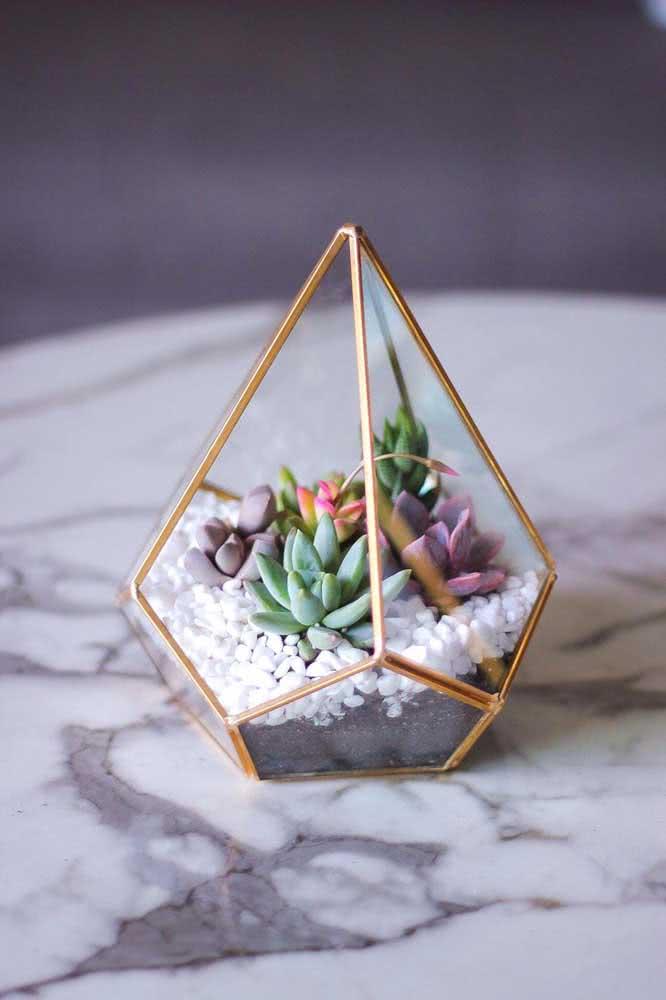 Um diamante de suculentas!