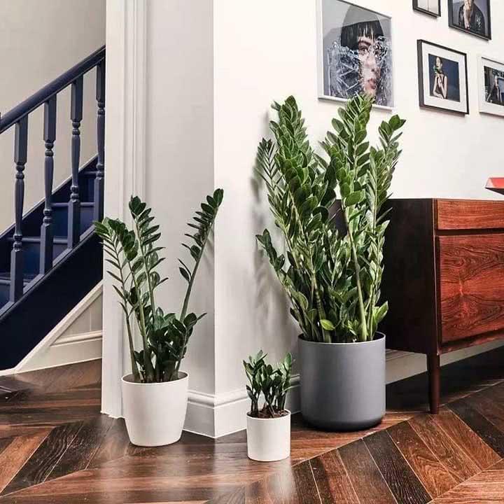 Casa americana com vasos de Zamioculca próximos ao corredor e a escada