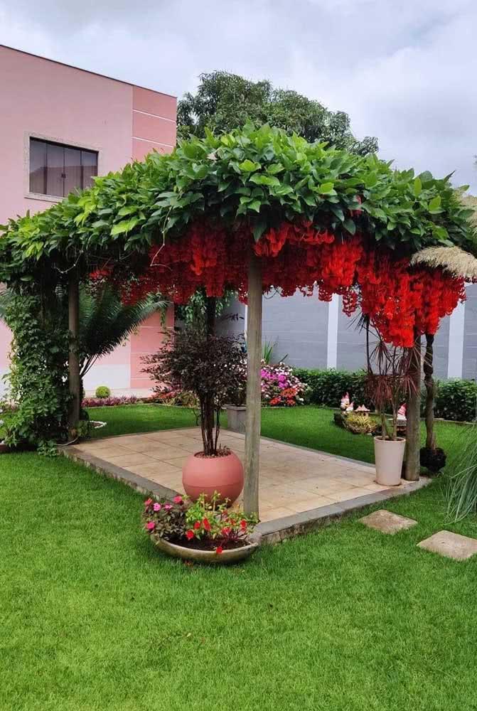 Trepadeira jade vermelha no pergolado do jardim: um oásis no quintal de casa