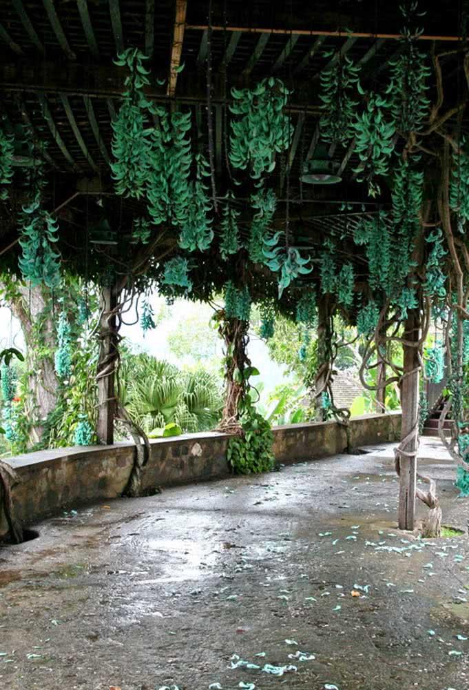 Para suportar o peso da trepadeira jade, lembre-se de reforçar a estrutura do pergolado na medida em que a planta vai crescendo
