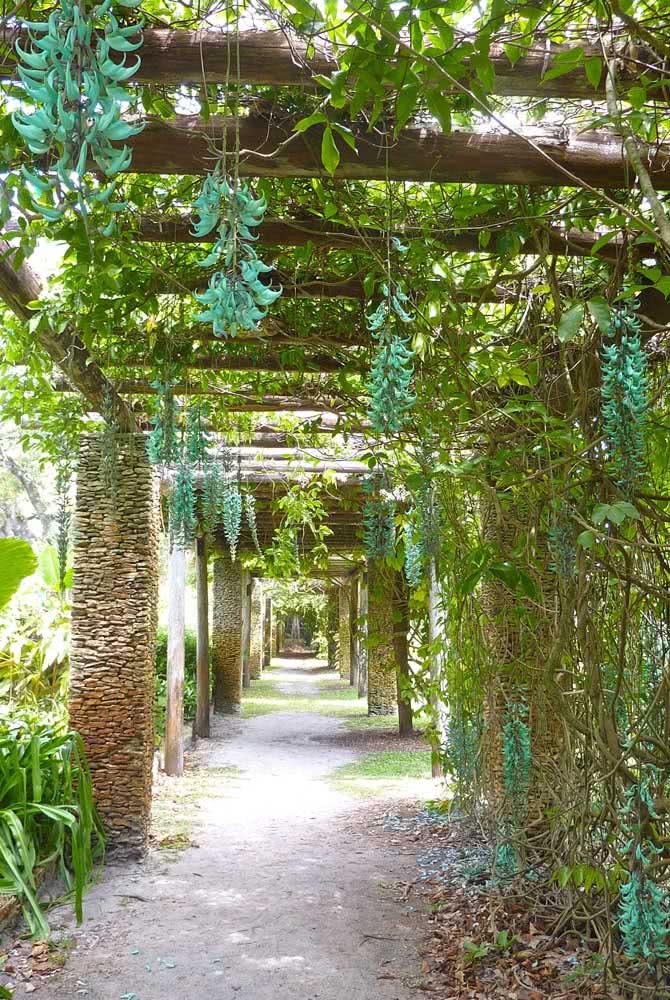 Que tal um caminho no jardim adornado por lindas flores de jade? A estrutura de madeira dá conta de suportar o peso da planta
