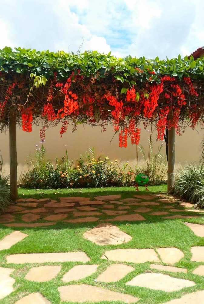 Trepadeira jade vermelha garantindo aquela sombrinha perfeita para os dias de verão