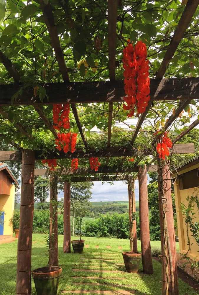 Quer coisa mais linda do que uma trepadeira jade em uma casa de campo?