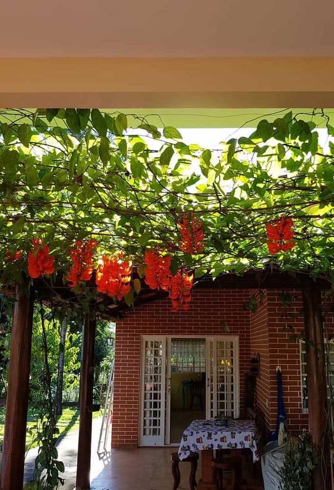 Aquela varanda charmosa e acolhedora pode ficar ainda mais bonita com a trepadeira jade laranja