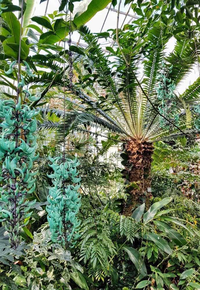 A trepadeira jade é uma ótima companhia de jardins tropicais
