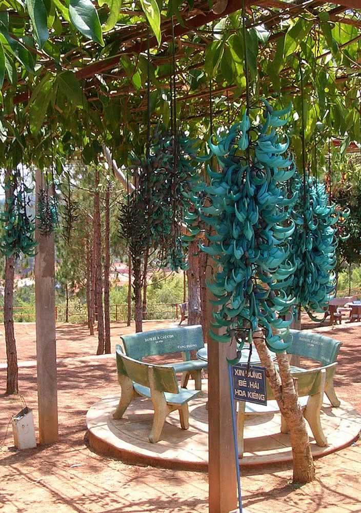 Um cantinho de paz e descanso cercado por cachos de jades azuis