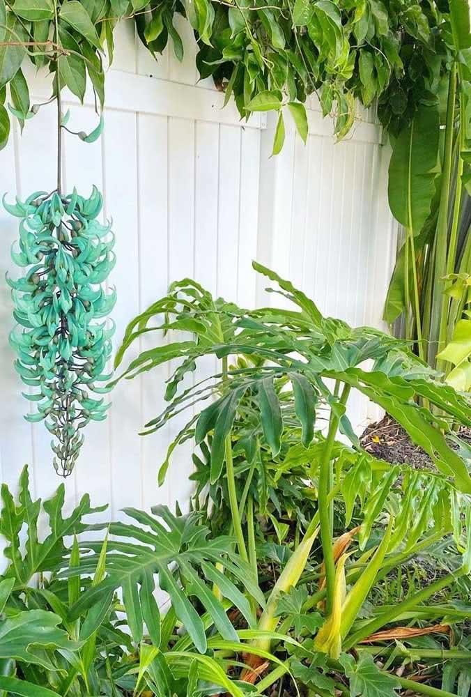 Crie um jardim tropical em casa e garanta um lugar de destaque para a trepadeira jade azul