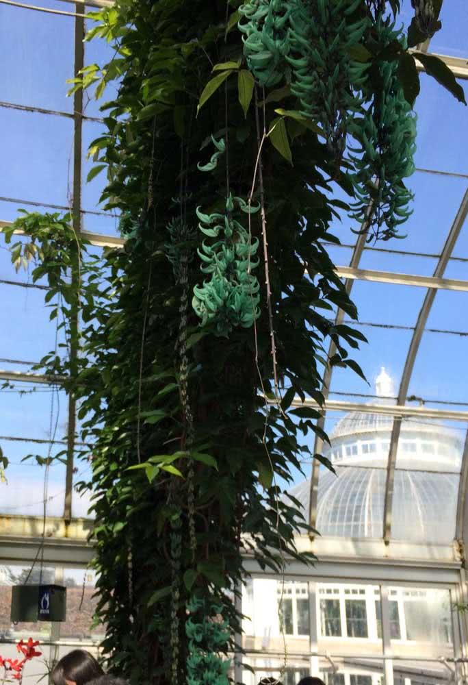 Arco de jades azuis dentro da estufa de vidro