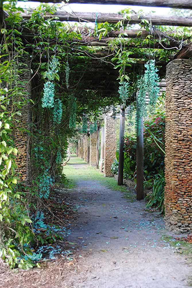 A trepadeira jade pode ser a melhor opção para uma entrada de casa ou mesmo uma chácara